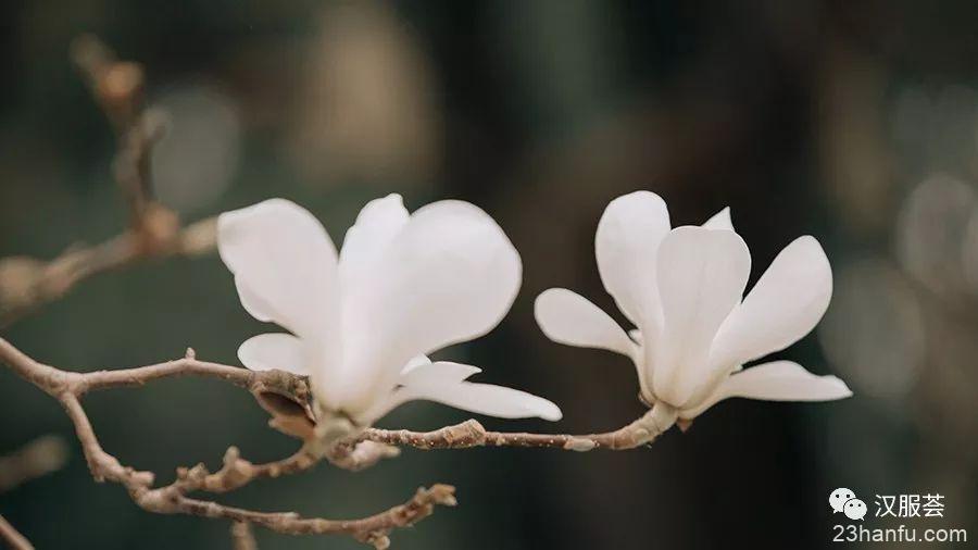 【汉服仕女】霓裳片片晚妆新
